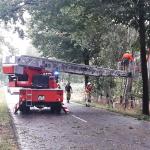 2020-08-09_Baum-auf-Strasse_12