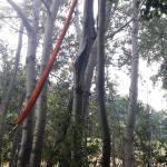 2020-08-09_Baum-auf-Strasse_13