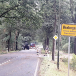 2020-08-09_Baum-auf-Strasse_16